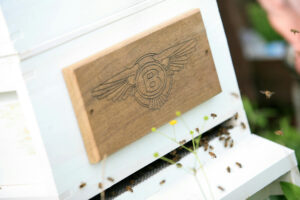 BENTLEY'S FLYING BEES RETURN TO WORK - WITH EXTRA HELP TO COME BACK STRONGER