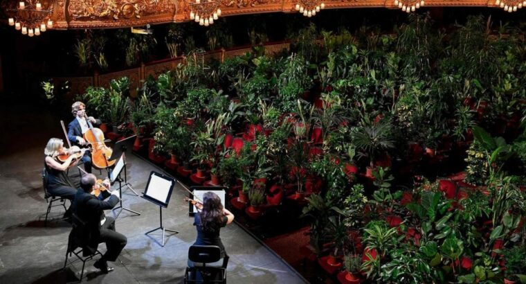 Barcelona Opera Reopens With An Audience Of Plants